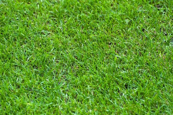 Greenplan GP Rabio 20 kg 9+3+6 für 200 - 415 m²