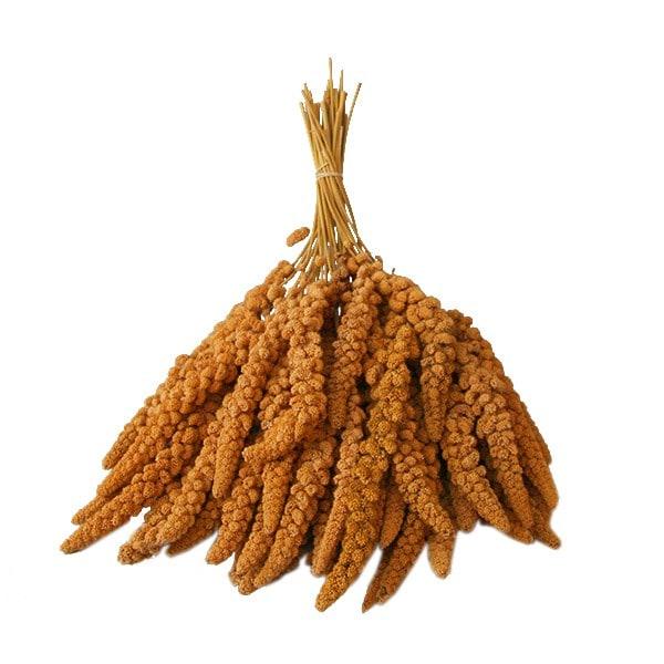 Gelbe Kolbenhirse 2,5 kg