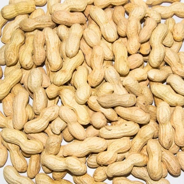 Paul's Mühle Erdnüsse mit Schale für Futterzwecke 10 kg