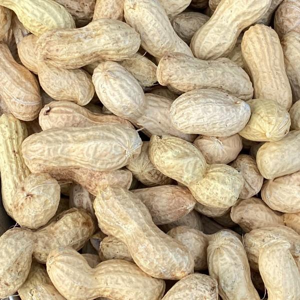Paul's Mühle High Premium Erdnüsse in Schale für Futterzwecke 2 x 10 kg