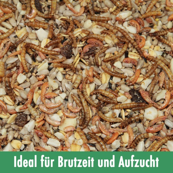 Paul's Mühle Wildvogelfutter Phönix 1 kg - ideal für Brutzeit und Aufzucht